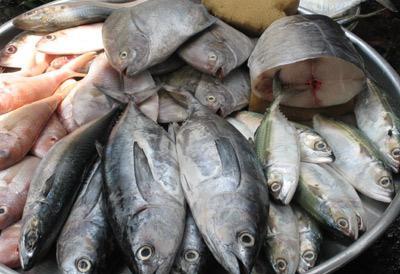 Cách chọn thực phẩm tươi sống, cach chon thuc pham tuoi song