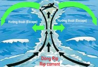 Cách xử trí khi du lịch biển gặp hiểm họa, cach xu tri khi du lich bien gap hiem hoa