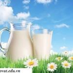 5 tác dụng diệu kỳ của sữa tươi có thể bạn chưa biết
