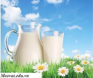 Tác dụng của sữa tươi, tac dung cua sua tuoi