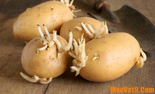 Mẹo chọn và bảo quản khoai tây đúng cách:
