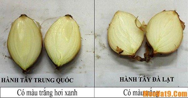 Phân biệt hành tây Việt Nam và Trung Quốc chuẩn nhất