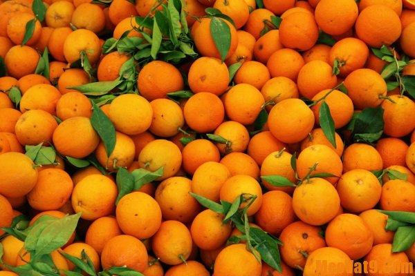 Cách phân biệt cam, quýt thường và do chín ép