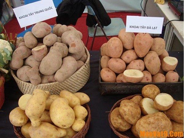 Cách phân biệt khoai tây Trung Quốc