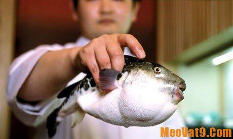 Hướng dẫn cách nhận biết cá nóc có độc tố