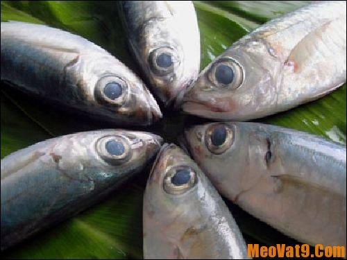 Mẹo phân biệt cá tươi và cá ươn