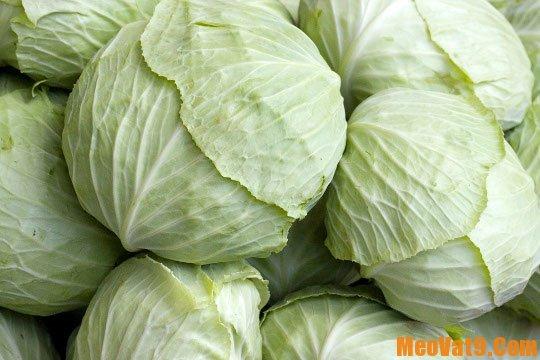 Mẹo phân biệt bắp cải Trung Quốc