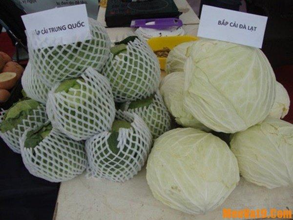 Hướng dẫn nhận biết bắp cải Trung Quốc