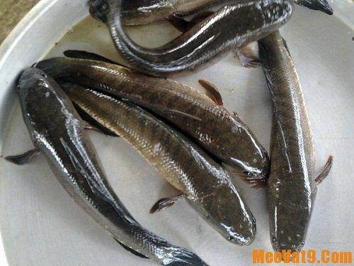 Mẹo vặt rút xương cá nhanh