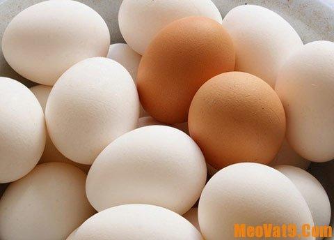 Kinh nghiệm phân biệt trứng cũ, mới