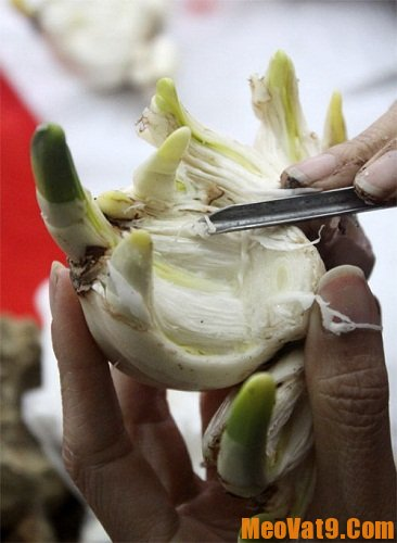 Cách gọt hoa thủy tiên