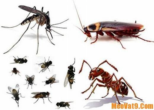 Hướng dẫn đuổi côn trùng trong nhà