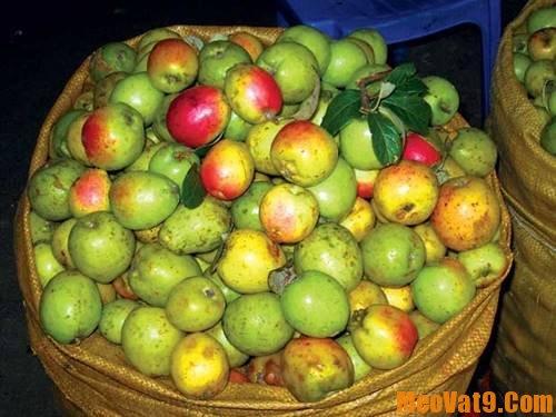 Phân biệt táo mèo Việt Nam cực chính xác: Làm sao để phân biệt táo mèo Việt Nam và táo mèo Trung Quốc