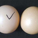 Mách bạn 7 mẹo phân biệt trứng gà tẩy trắng cực chuẩn