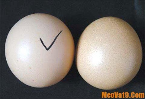 Mẹo phân biệt trứng gà tẩy trắng: Nhận biết trứng gà ta và trứng gà công nghiệp tẩy trắng như thế nào?