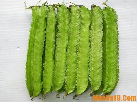 Cách chữa đau dạ dày bằng đậu rồng, chữa bệnh đau dạ dày bằng đậu rồng như thế nào?
