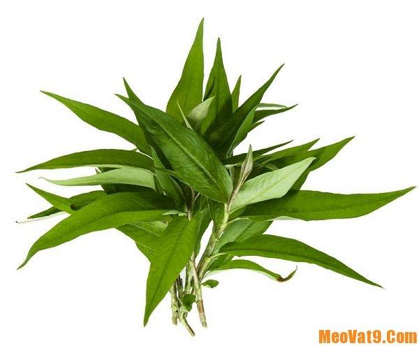 Cách trị lang ben bằng rau răm, hướng dẫn các phương pháp chữa bệnh lang ben đơn giản, hiệu quả cực nhanh