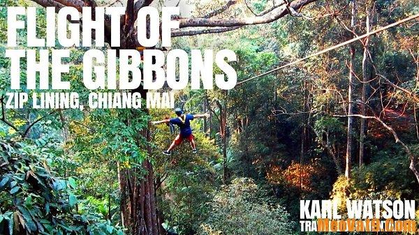 Trải nghiệm đu dây Flight of the Gibbon Chiang Mai